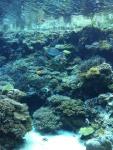 3日目美ら海3